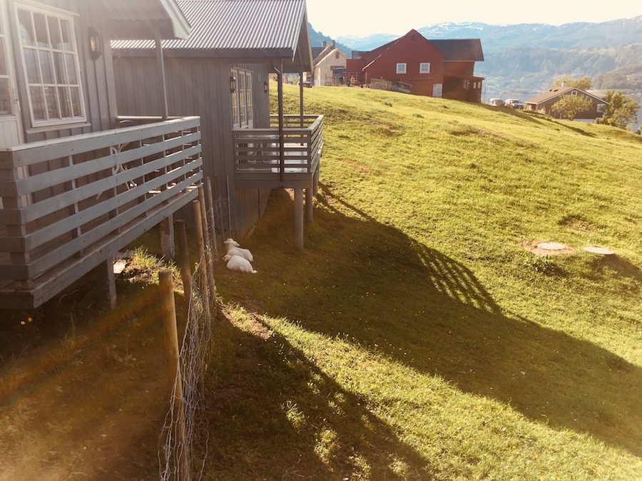 Blick aus unserer Hütte bei Oddland Camping.